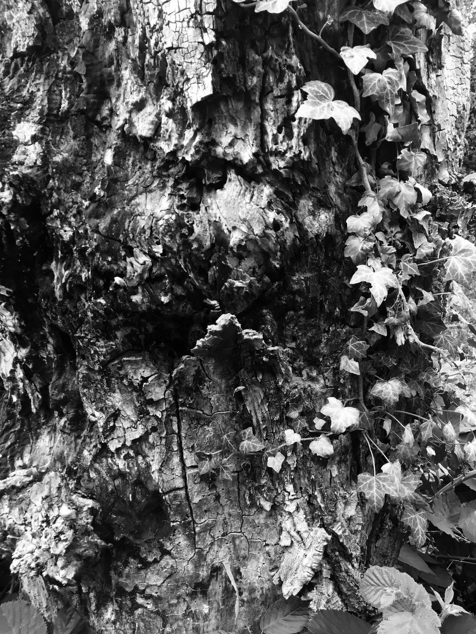 tree trunk, growth, nature, textured, bark, plant, no people, backgrounds, full frame, day, tree, ivy, leaf, outdoors, close-up, fragility, lichen, beauty in nature, fungus, flower