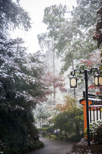 Autumn Snow Snow In Autumn Tourist Attractions Vertical Composition Autumn Colors Autumn Colours Autumn Leaves Beauty In Nature Day Fall Beauty Fall Colors Fall Leaves Fallen Leaves Full Colors  Nanjing Qingliang Shan Park Nature No People Outdoors Snow Day Snow View Snow View In The Fall Snow Views Tree Vertical Composition