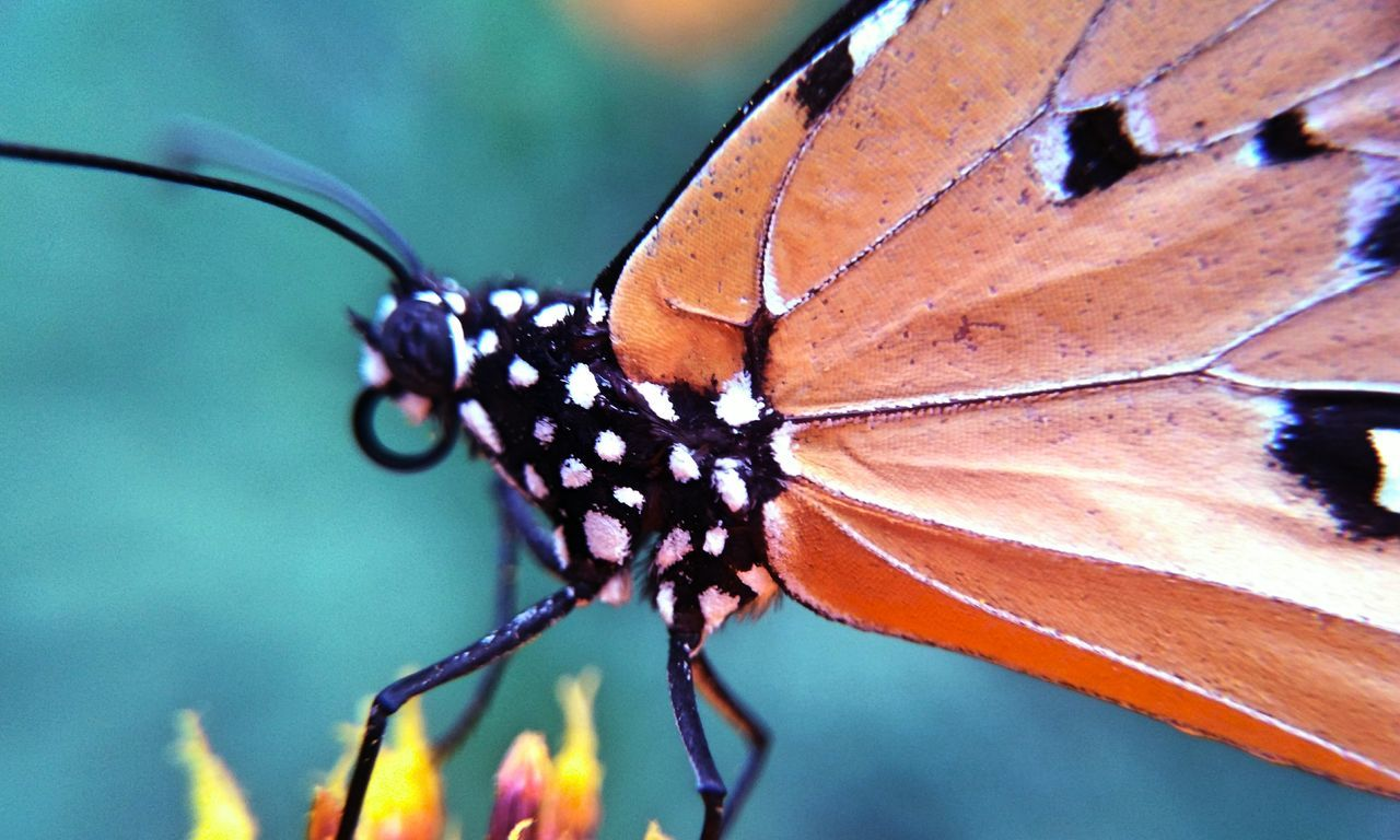 one animal, butterfly - insect, animals in the wild, animal themes, insect, animal wildlife, close-up, wildlife, butterfly, focus on foreground, no people, nature, animal markings, outdoors, day, fragility, leaf, beauty in nature, perching, freshness