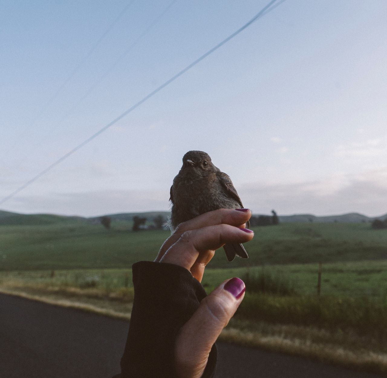 Human Hand One Person Holding Real People Human Body Part Animal Themes One Animal Day Outdoors Nature Mammal Bird Sky Perching Close-up People Rural Poetry Place Of Heart