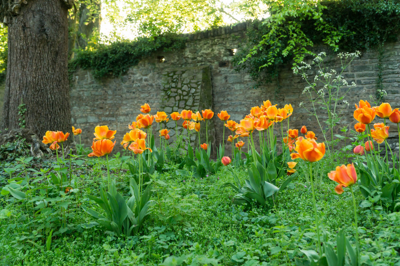 Orange flowers in the countryside Bushes Countryside Uk Daytime Photography Green Leaves. Orange Flowers In The Countryside Park Plants 🌱 Rural Scenes