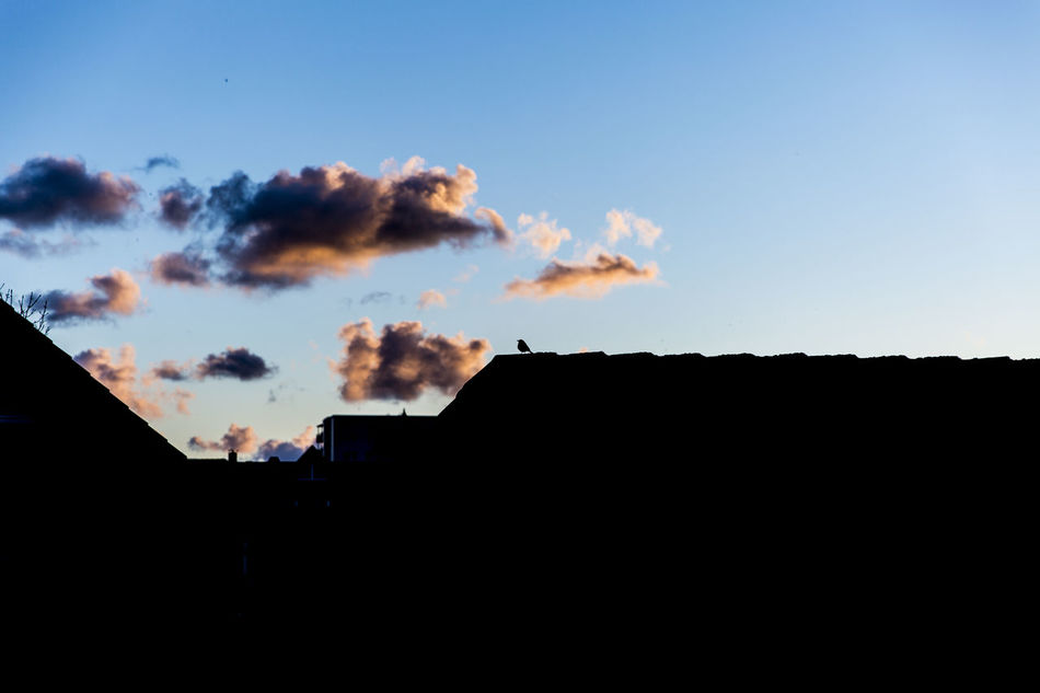 Architecture Bird Bird Photography Building Exterior Built Structure Cloud - Sky Clouds And Sky Day House Low Angle View Nature No People On The Top Outdoors Roof Rooftop Shadow Shadows & Lights Silhouette Sky Sky And Clouds Sunset Sunset And Clouds  Sunset Silhouettes Tiled Roof