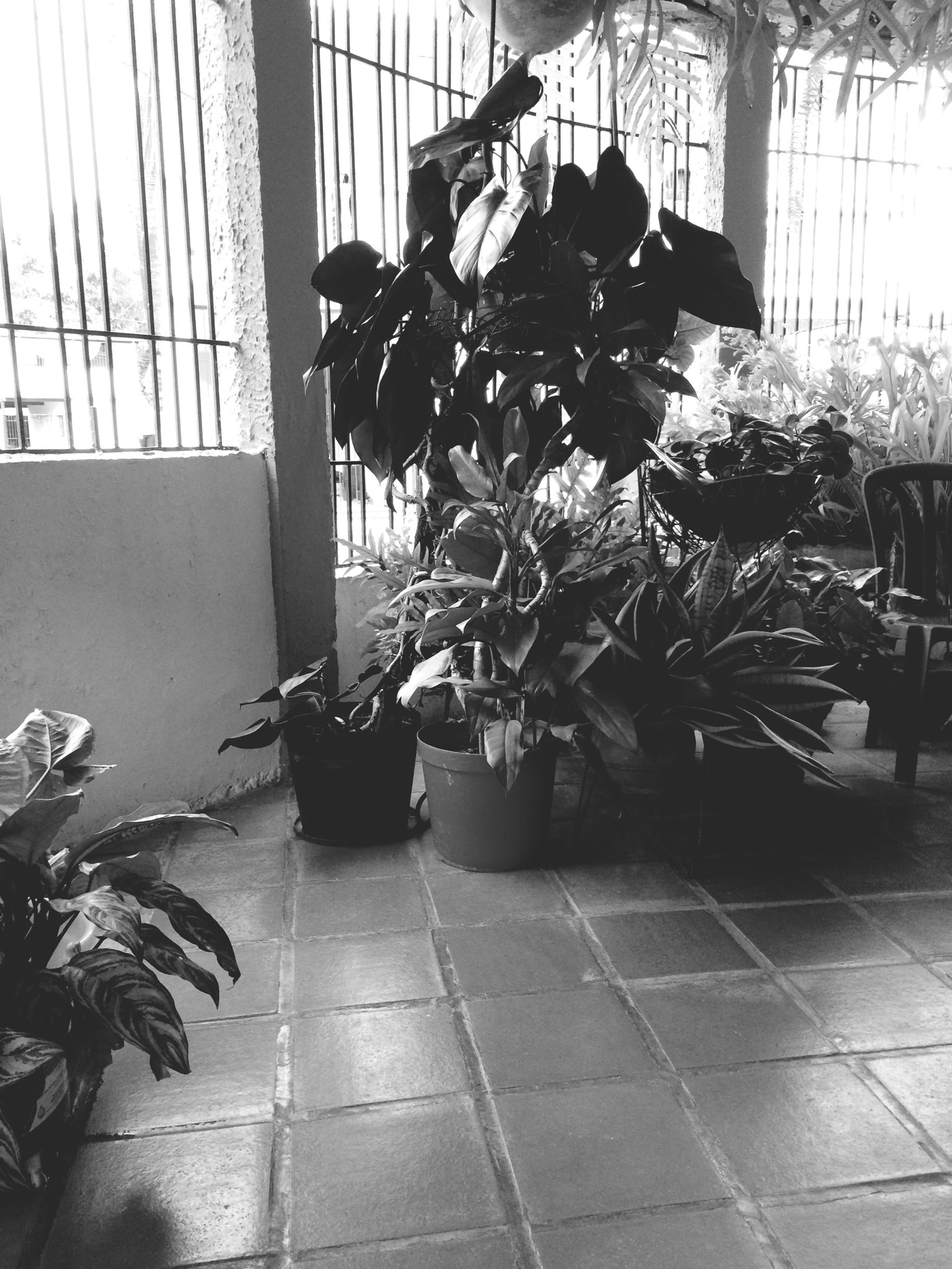 indoors, potted plant, architecture, built structure, window, tiled floor, plant, chair, sunlight, glass - material, flooring, shadow, day, table, building exterior, home interior, absence, growth, transparent, city