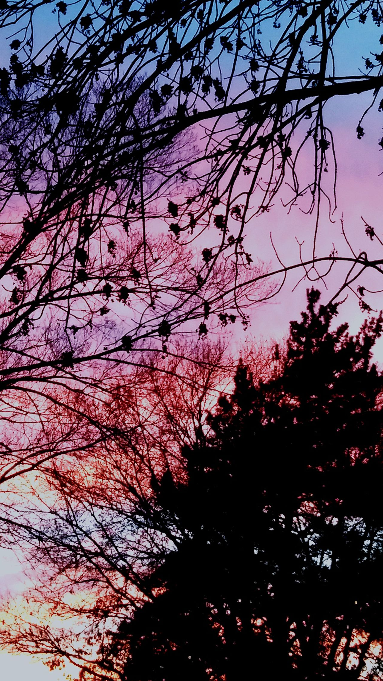The Great Outdoors - 2017 EyeEm Awards Tree Sky Silhouette Nature Beauty In Nature No People Branch Outdoors Bare Tree Sunrise - Dawn First Light