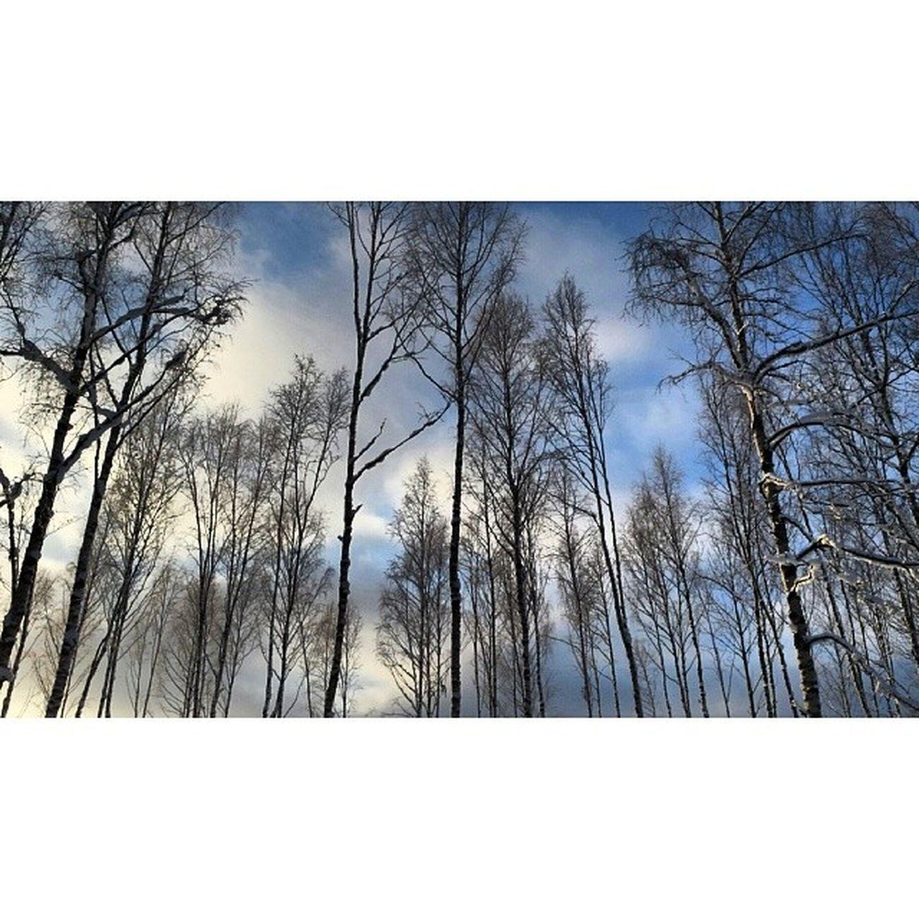 Dalarna Instadalarna Hjortnäs Hjortnäs Vinter Träd