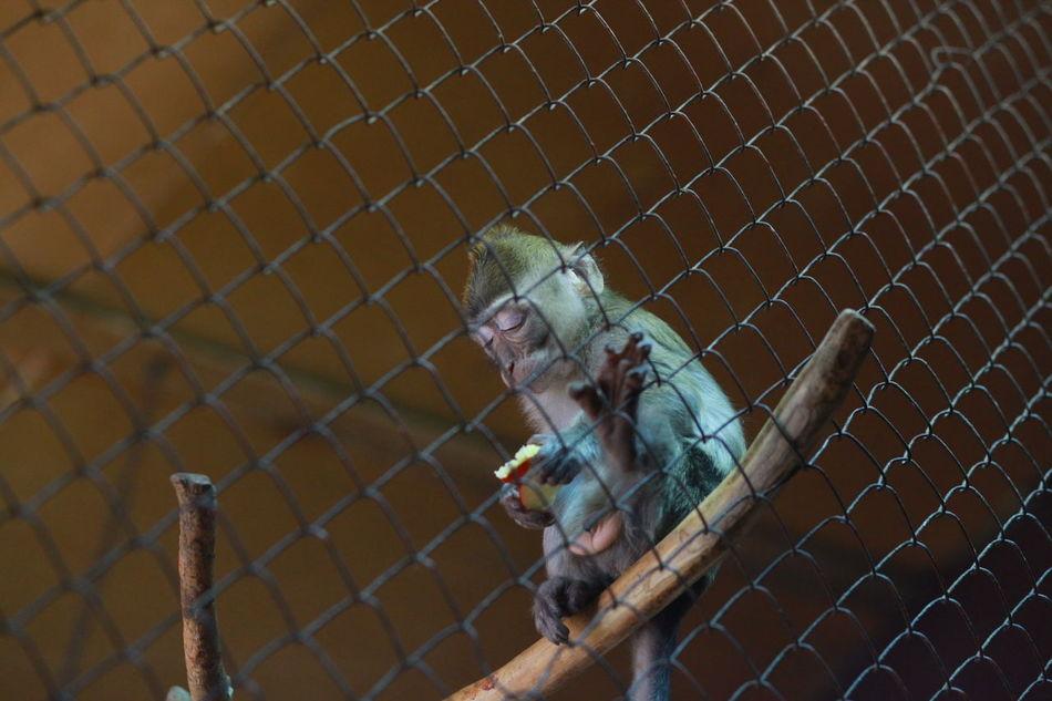 Baby Cage Caged Caged Freedom Captive Animals Captivity Eating Mammal Mammals Monkey Monkey Business Monkeys