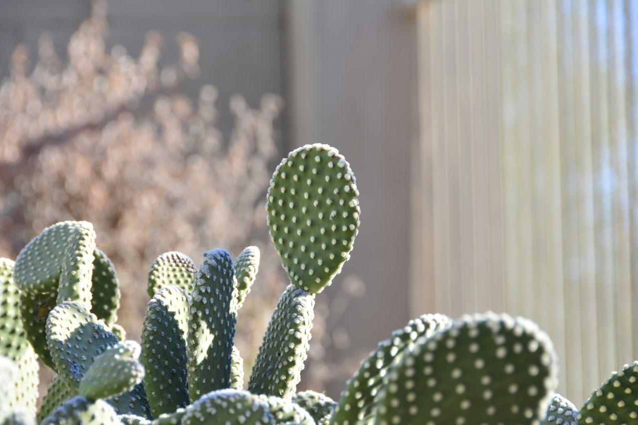 Beautiful stock photos of sunshine, Cactus, Cave Creek, Close Up, Day
