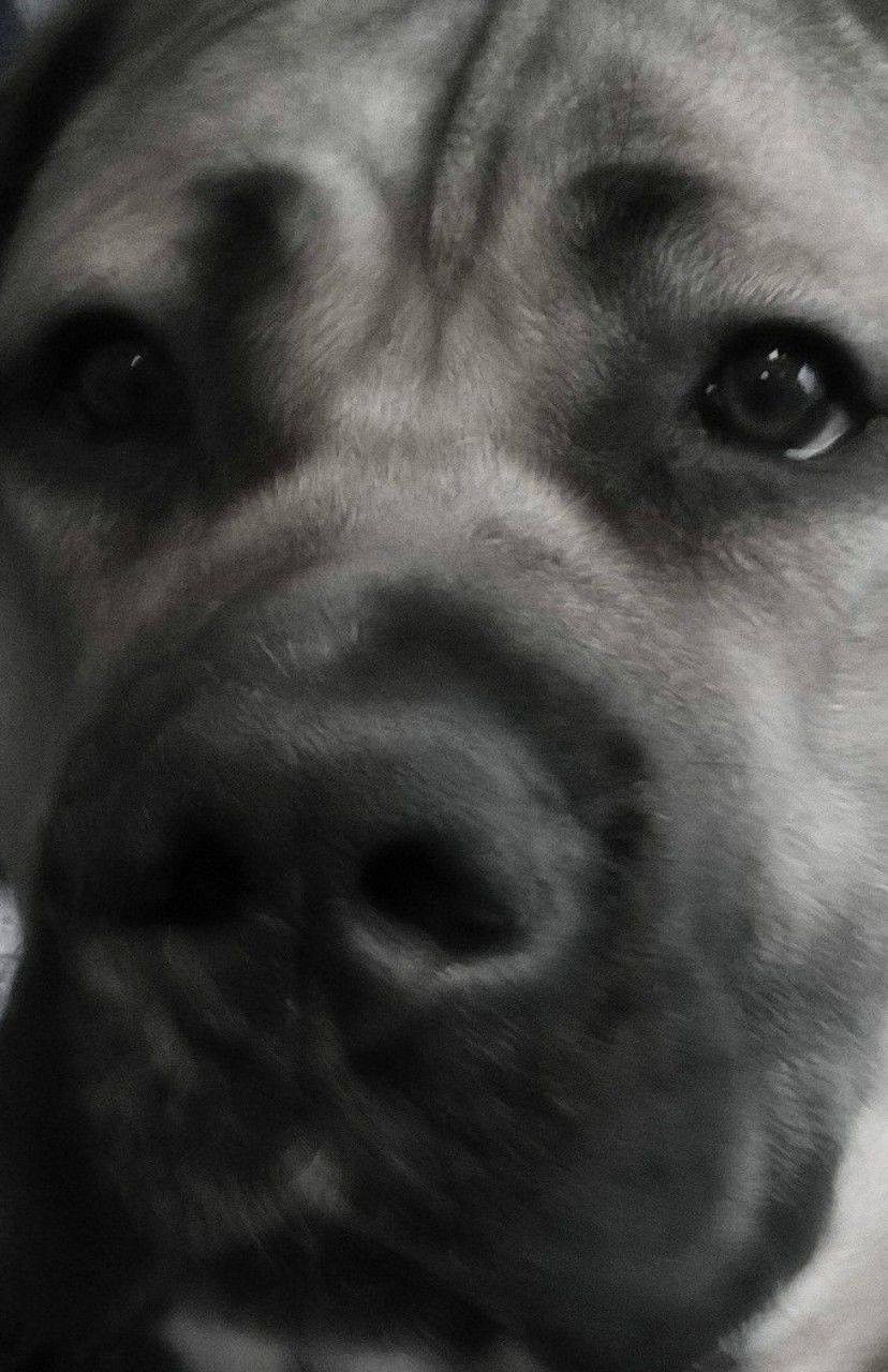 dog, pets, domestic animals, animal themes, one animal, mammal, close-up, portrait, looking at camera, animal head, no people, indoors, day