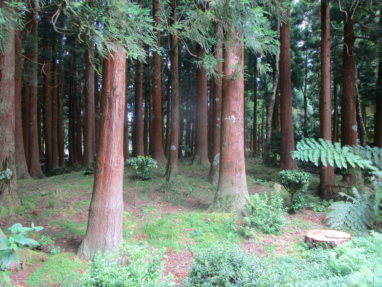 tree, forest, nature, tree trunk, growth, tranquility, no people, outdoors, beauty in nature, day