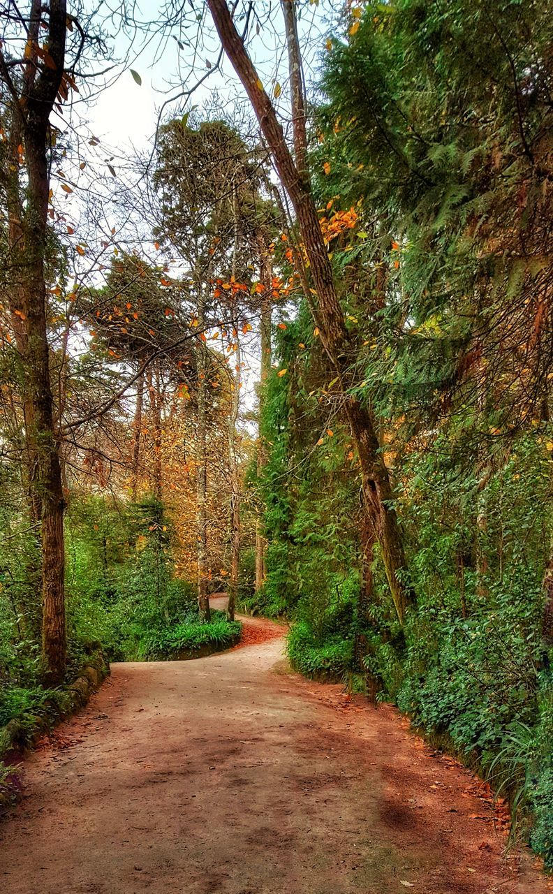 tree, nature, tranquility, the way forward, tranquil scene, beauty in nature, growth, scenics, forest, day, no people, green color, outdoors, branch, autumn, road, landscape, sky