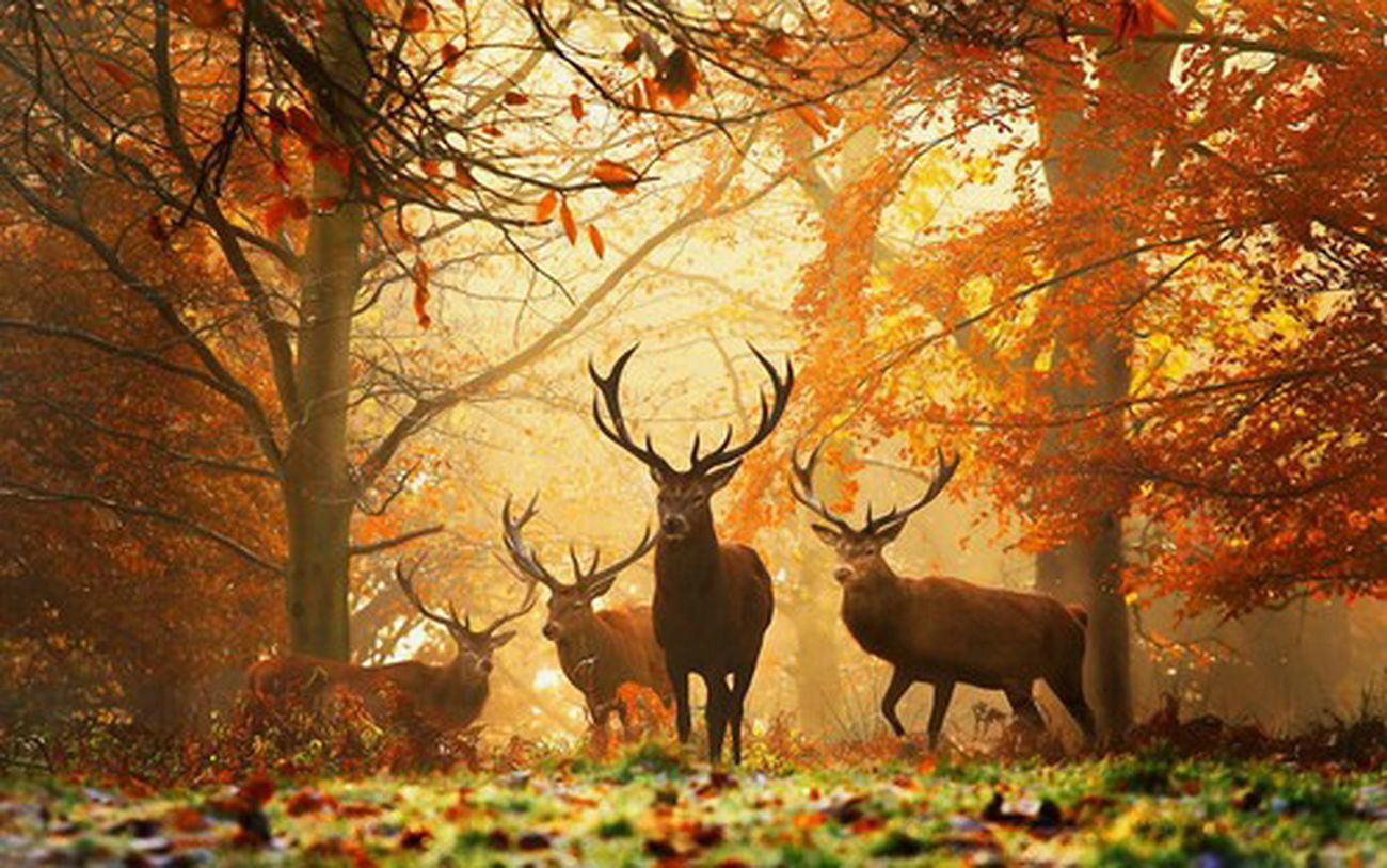 Not My Creation but it is really amazing Nature Deer Silhouette #wild