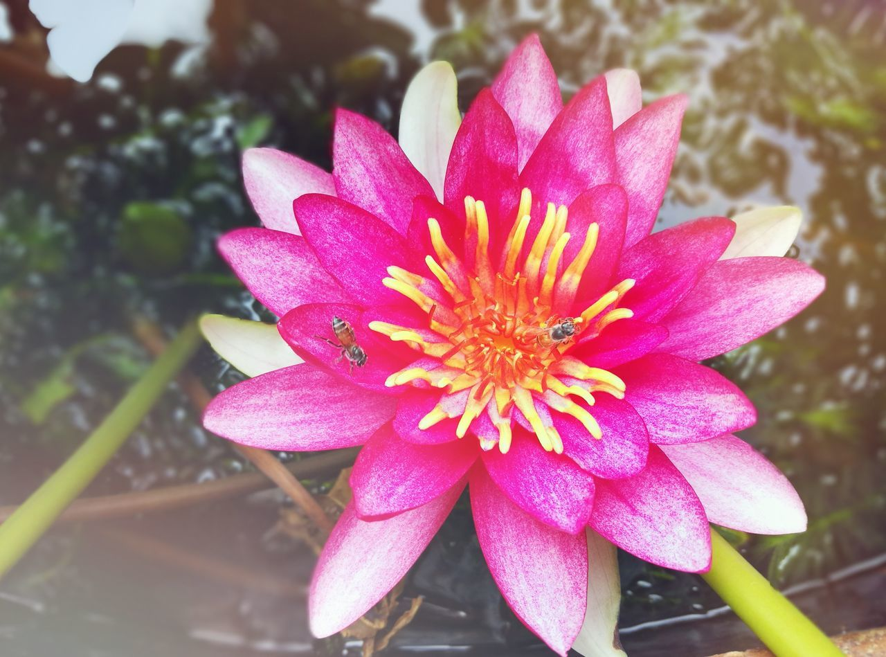 Flower Flower Head Pink Color Petal Day Nature Fragility Freshness Beauty In Nature Purple Outdoors Plant Growth Close-up No People