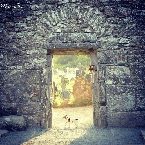 Dexter in a sunset doorway Ireland Dogs Jackchi Dexterthejackchi