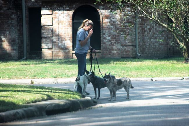 Dog walker. Candid shot Adult Candid Shot Day Dog Dog Walker Domestic Animals Leisure Activity Lifestyles Mammal Nature One Person Outdoors People People Watching Pets Standing