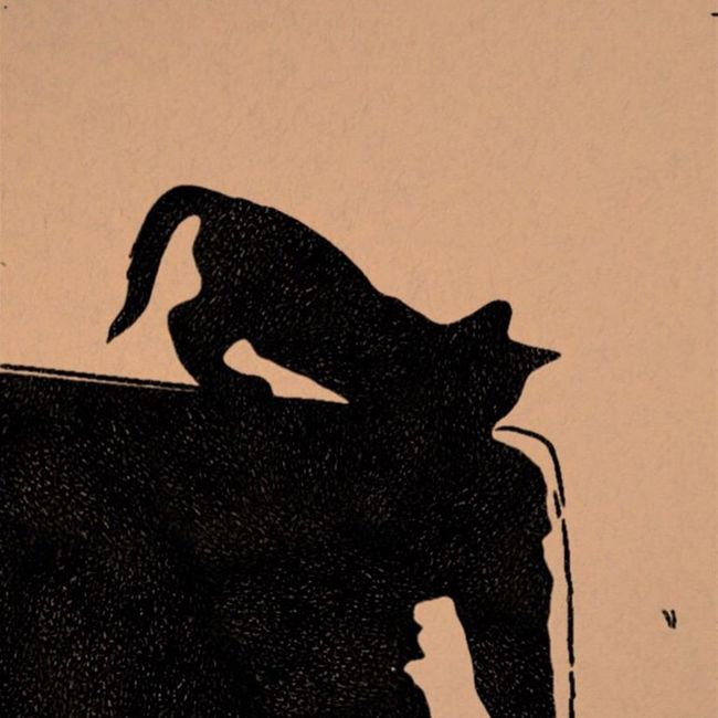 Cateffects Lillo Blackcats Instagood Instalike Instadaily Picoftheday Vscocam Vscogood Vscogram