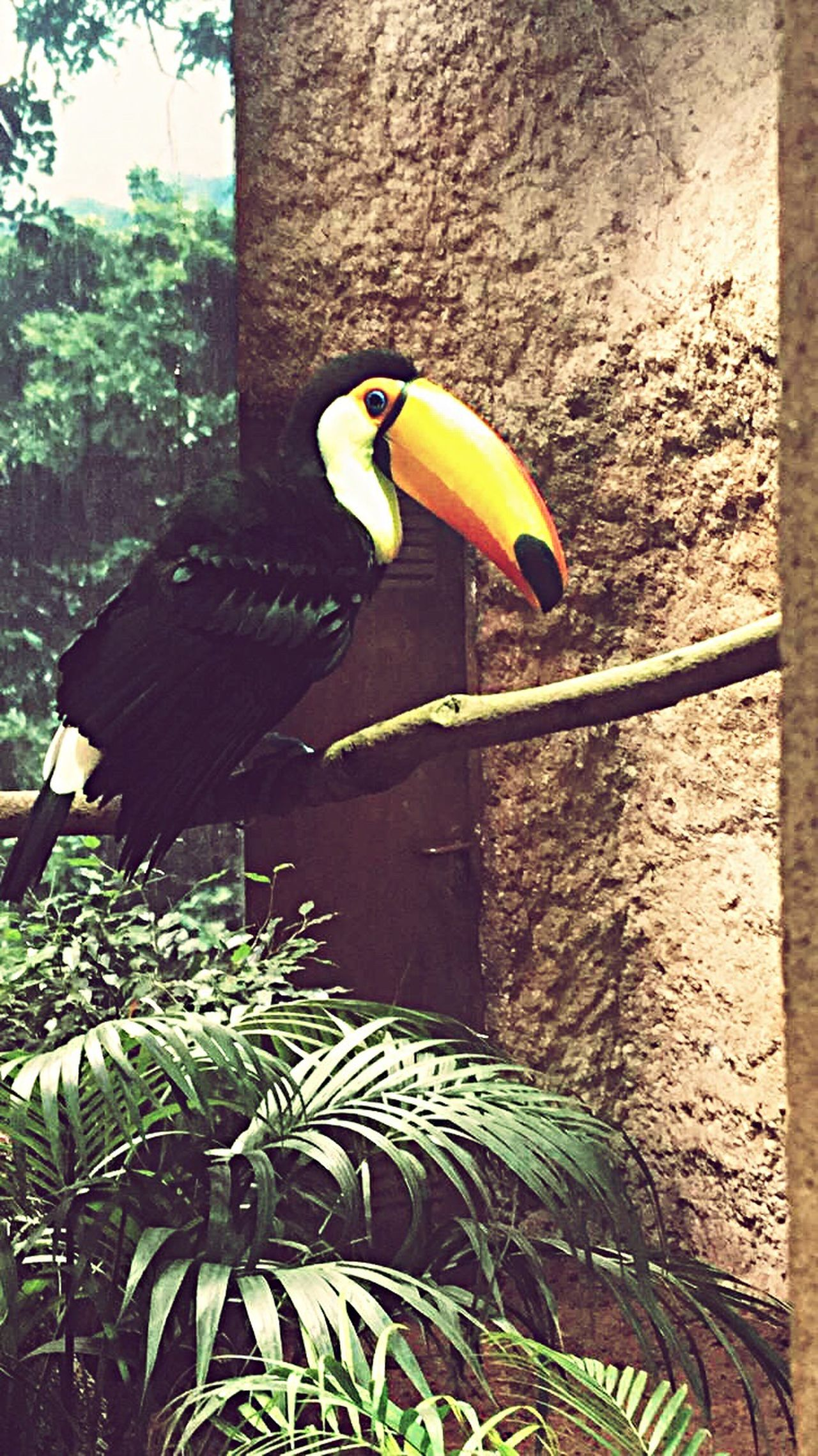 Bird Animal Themes One Animal Animals In The Wild Perching Day Tree Nature Outdoors No People Nature Tucan Forest