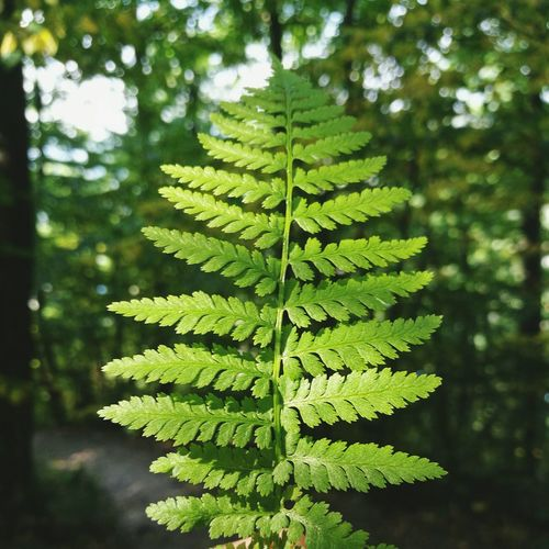 Leaf Nature Green Color Beauty In Nature Close-up Growth Plant Lush Foliage No People Day Tree Freshness Outdoors Fragility Plant Part Lush - Description Water Frond