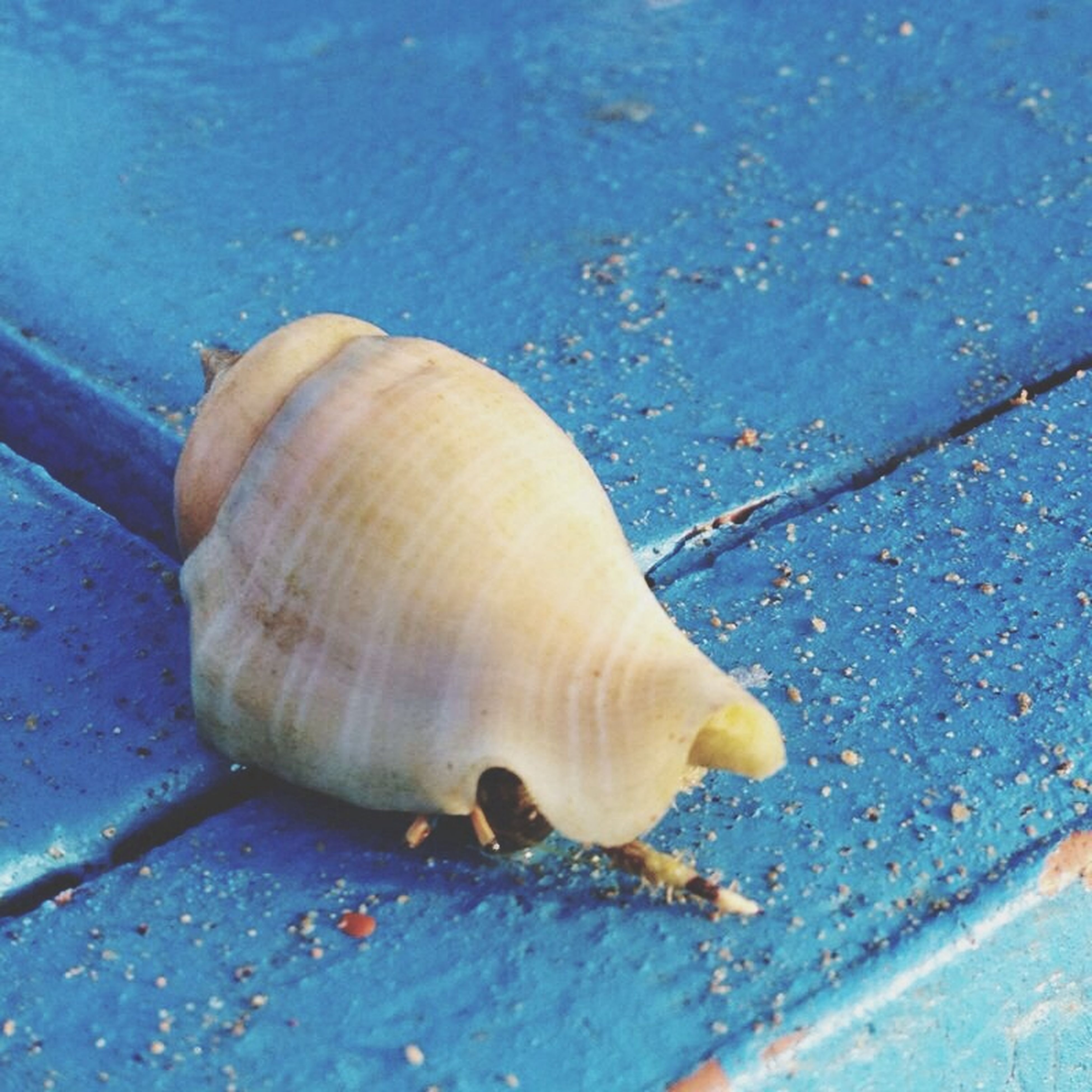 animal themes, animal shell, wildlife, animals in the wild, one animal, high angle view, water, snail, seashell, close-up, shell, nature, wet, no people, day, outdoors, sea life, blue, mollusk, sunlight