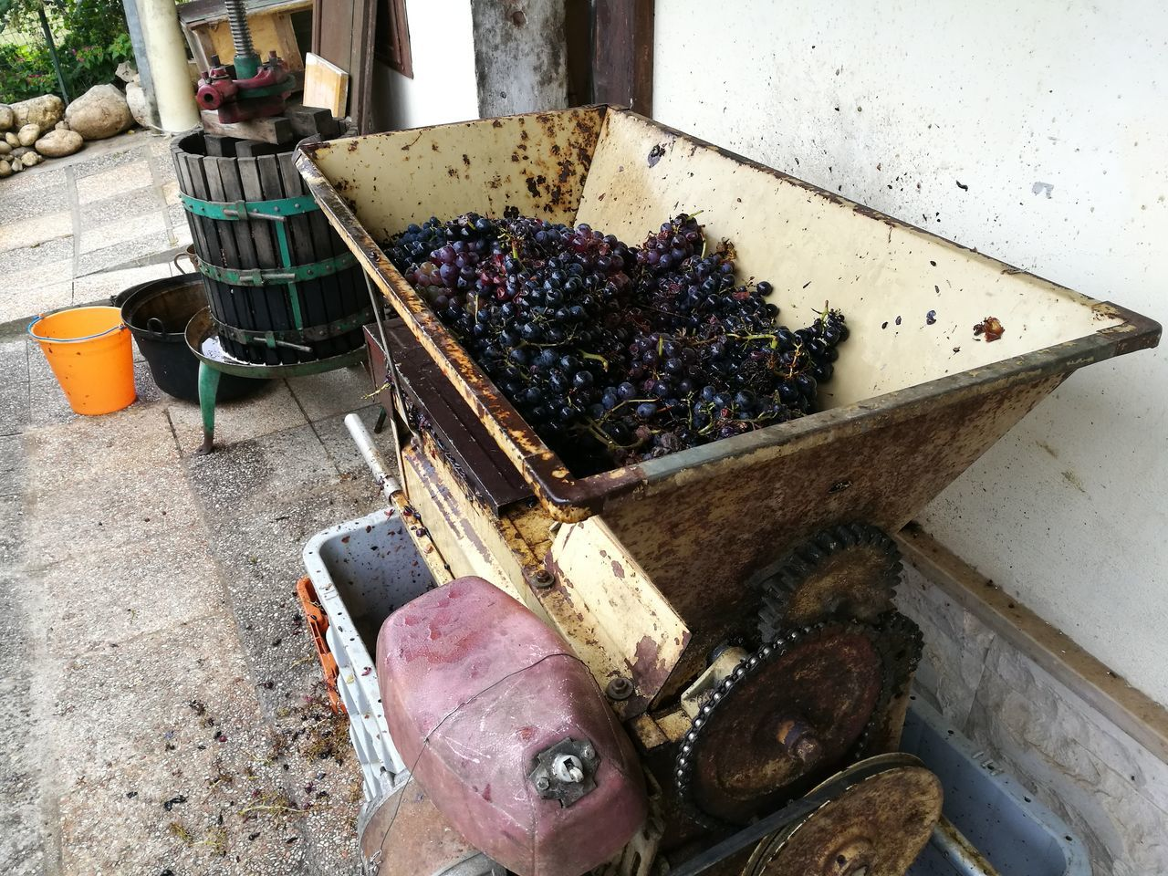 pressing of the must through press Alcohol Ancient Antique Grapefruit Harvest Homemade Food Machinery Manual Work Must Pressing Pressure Process Traditional Culture Winepress Wineproducers Wine Moments