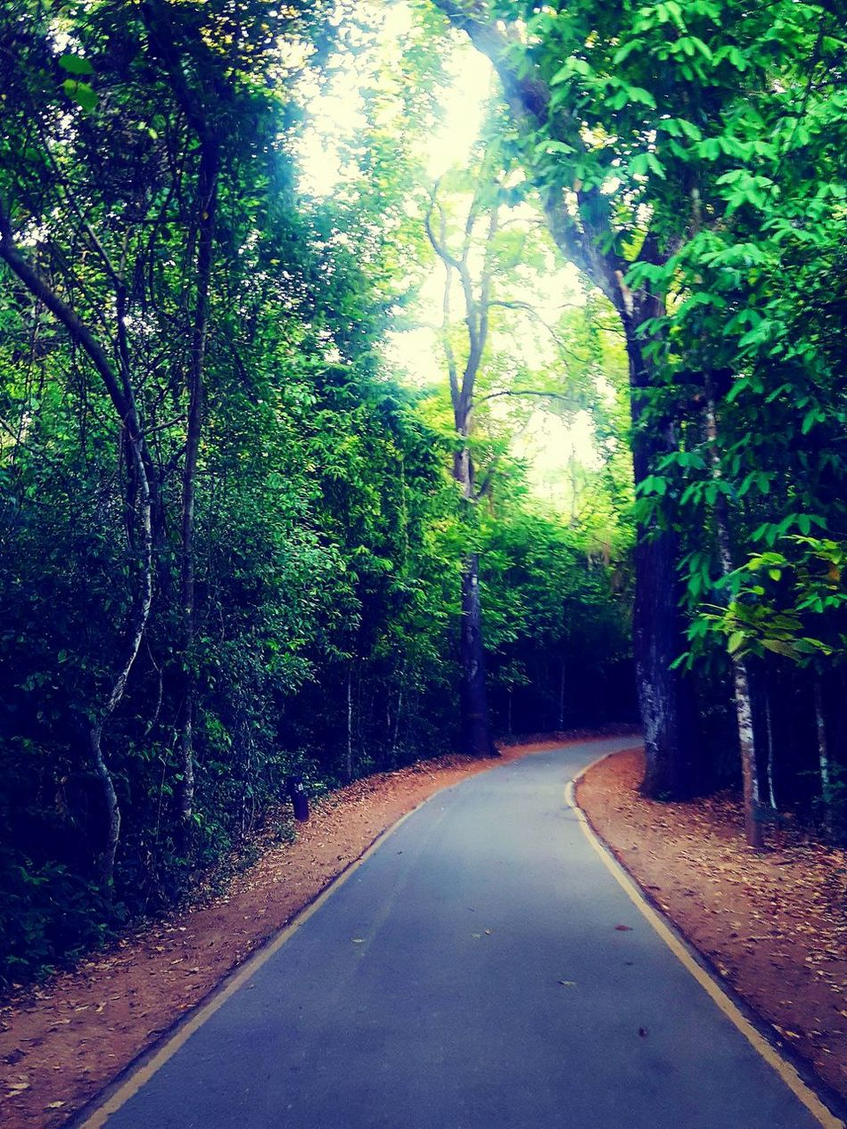 The way to Erawan Waterfall. Forest Walk Forest View The Way Forward Chillaxing EyeEmNewHere Tree Road Nature No People Growth Outdoors Day Green Color Tranquility Beauty In Nature