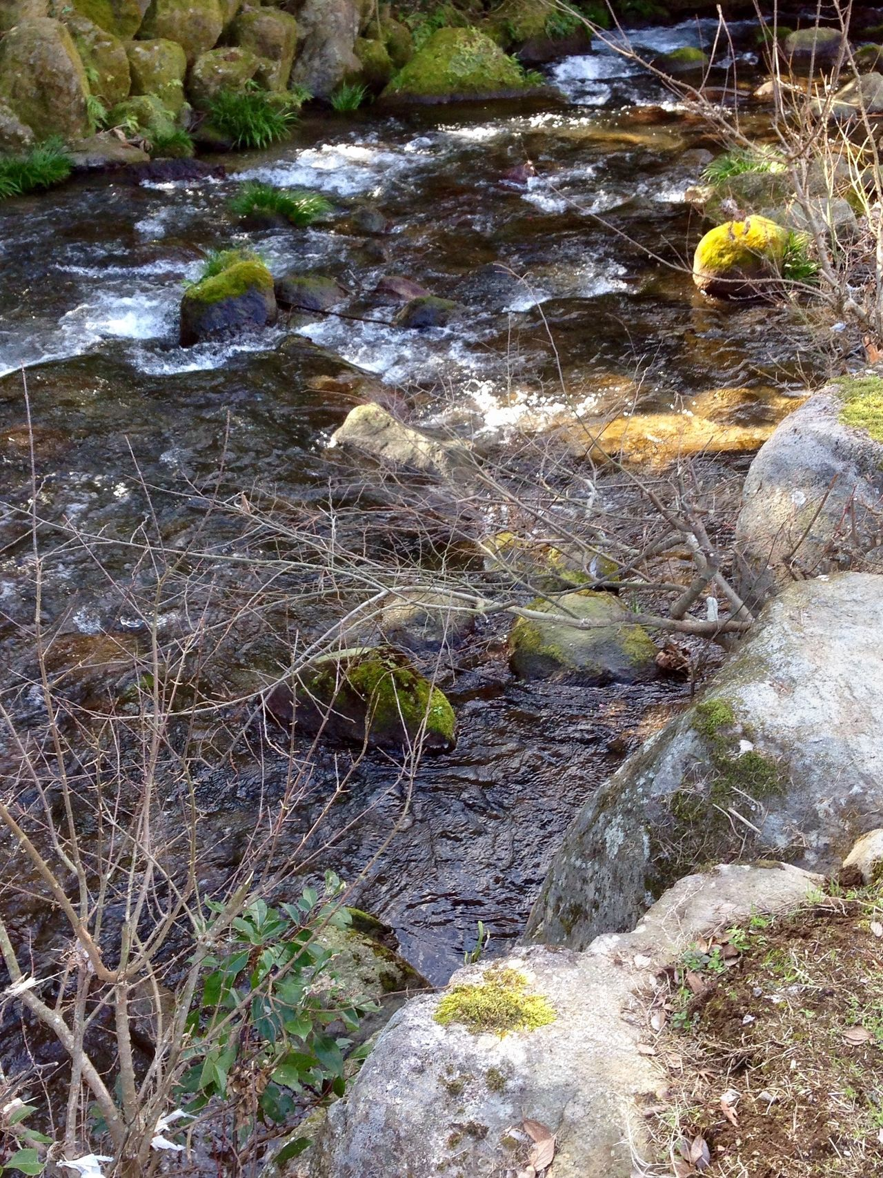Walking By The Creek Creekside Trail Creekside Photography Nature Outdoors Water Rock - Object No People Tranquility Day Grass Beauty In Nature Close-up