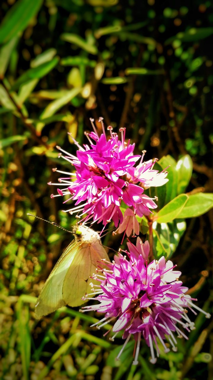flower, nature, fragility, beauty in nature, growth, purple, plant, freshness, pink color, petal, flower head, no people, day, outdoors, close-up, blooming