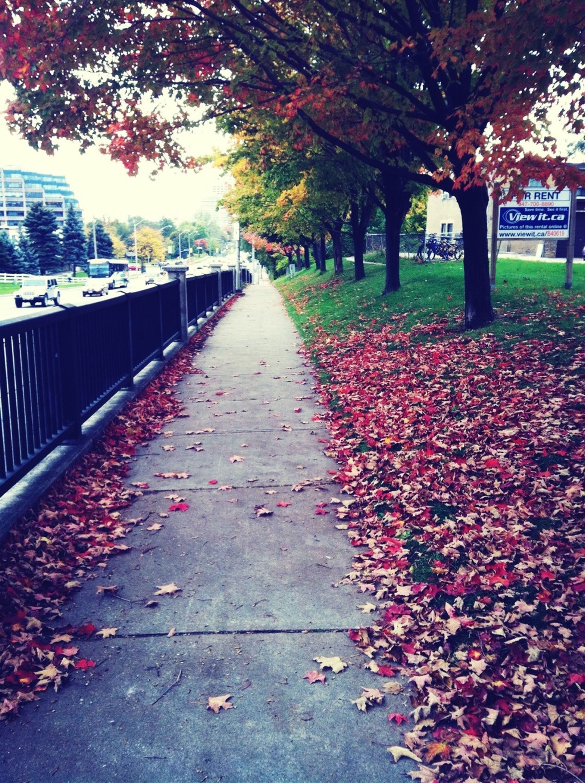 tree, autumn, the way forward, leaf, change, flower, diminishing perspective, season, growth, footpath, nature, park - man made space, vanishing point, fallen, day, red, branch, treelined, street, walkway