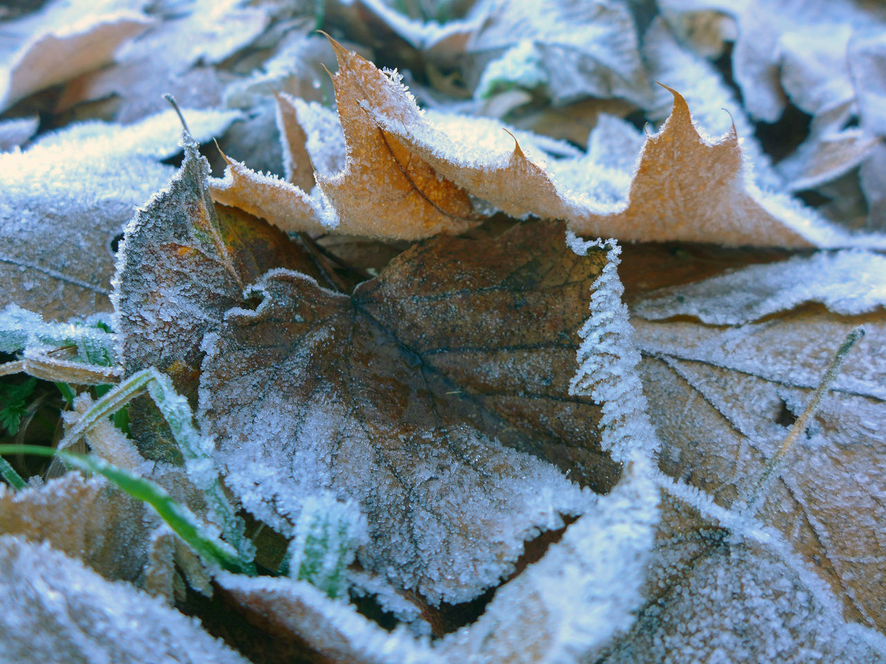 Backgrounds Beauty In Nature Close-up Cold Temperature Fragility Frozen Hoarfrost Ice Leaf Leaf Vein Leaves Nature Outdoors White Frost Winter Winter Leaves