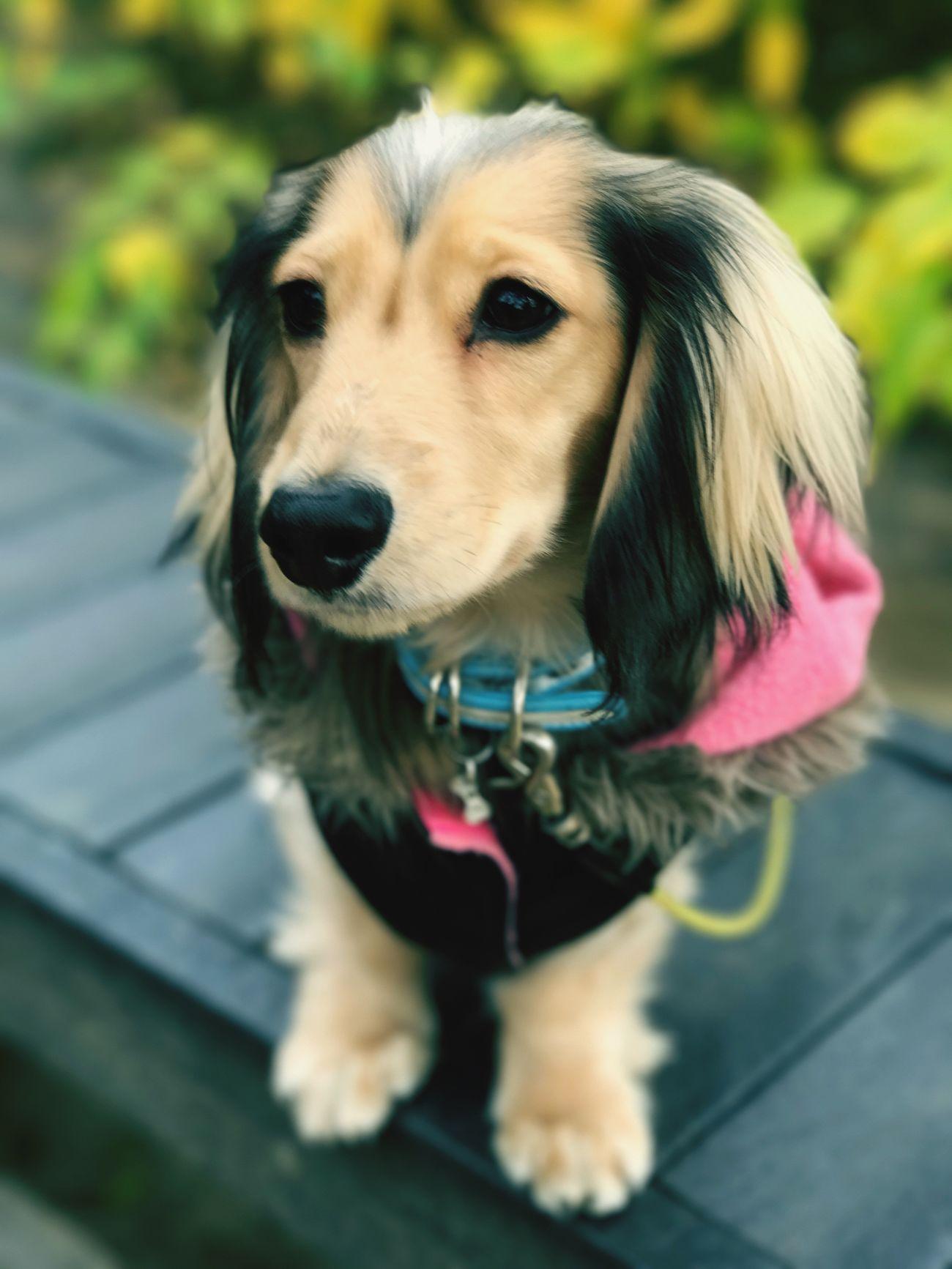 敷島公園 Dog Close-up IPhone7Plus Autumn