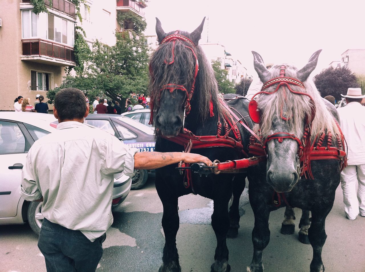 Catching breath... Horse Domestic Animals People IPhone Relaxing City Life Moments Of Life Details Of My Life My Favorite Photo Fresh On Eyeem  WeekOnEyeEm VSCO Made In Romania Adult Street Outdoors IPhoneography Street Life Architecture Citylife Day