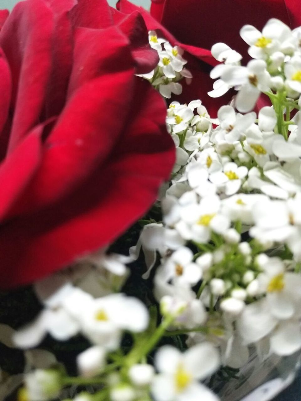 flower, petal, fragility, close-up, white color, nature, red, freshness, flower head, bouquet, no people, beauty in nature, wedding, growth, plant, day, outdoors