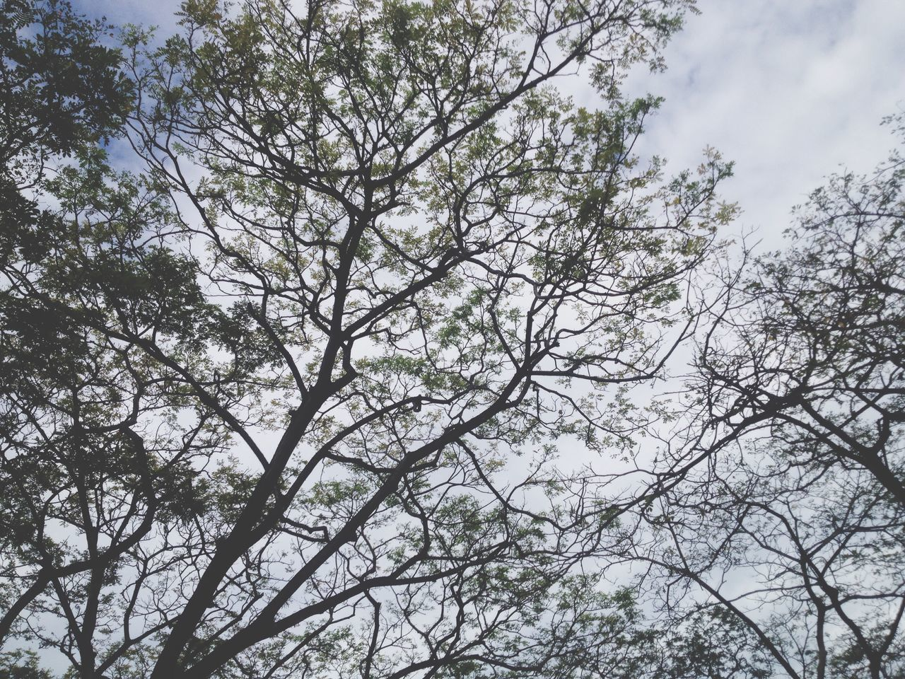 nature, tree, low angle view, branch, beauty in nature, outdoors, no people, tranquility, day, growth, sky, high