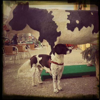 Dog and Cow at LPG Biomarkt by danW