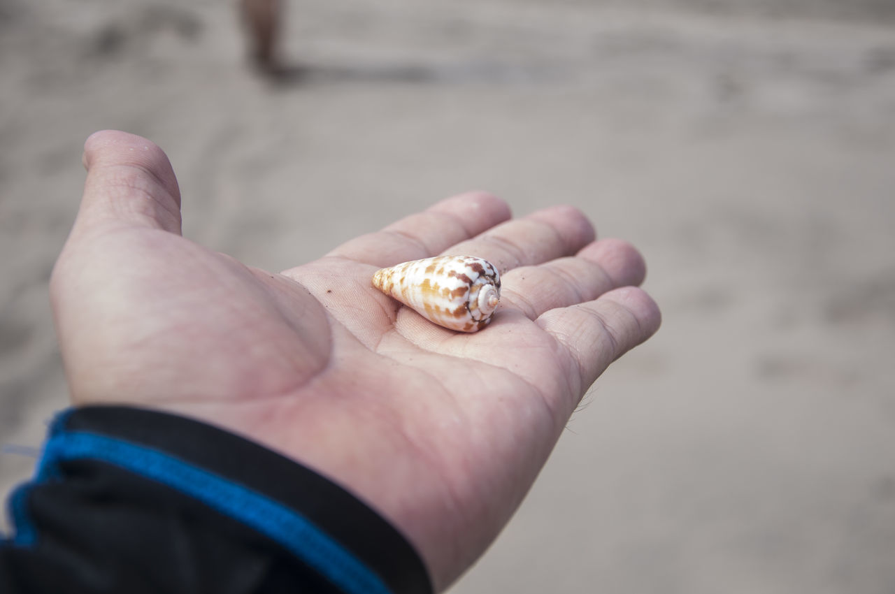 human hand, one person, human body part, beach, outdoors, one animal, real people, focus on foreground, day, holding, close-up, animal themes, hermit crab, animals in the wild, animal wildlife, nature, people