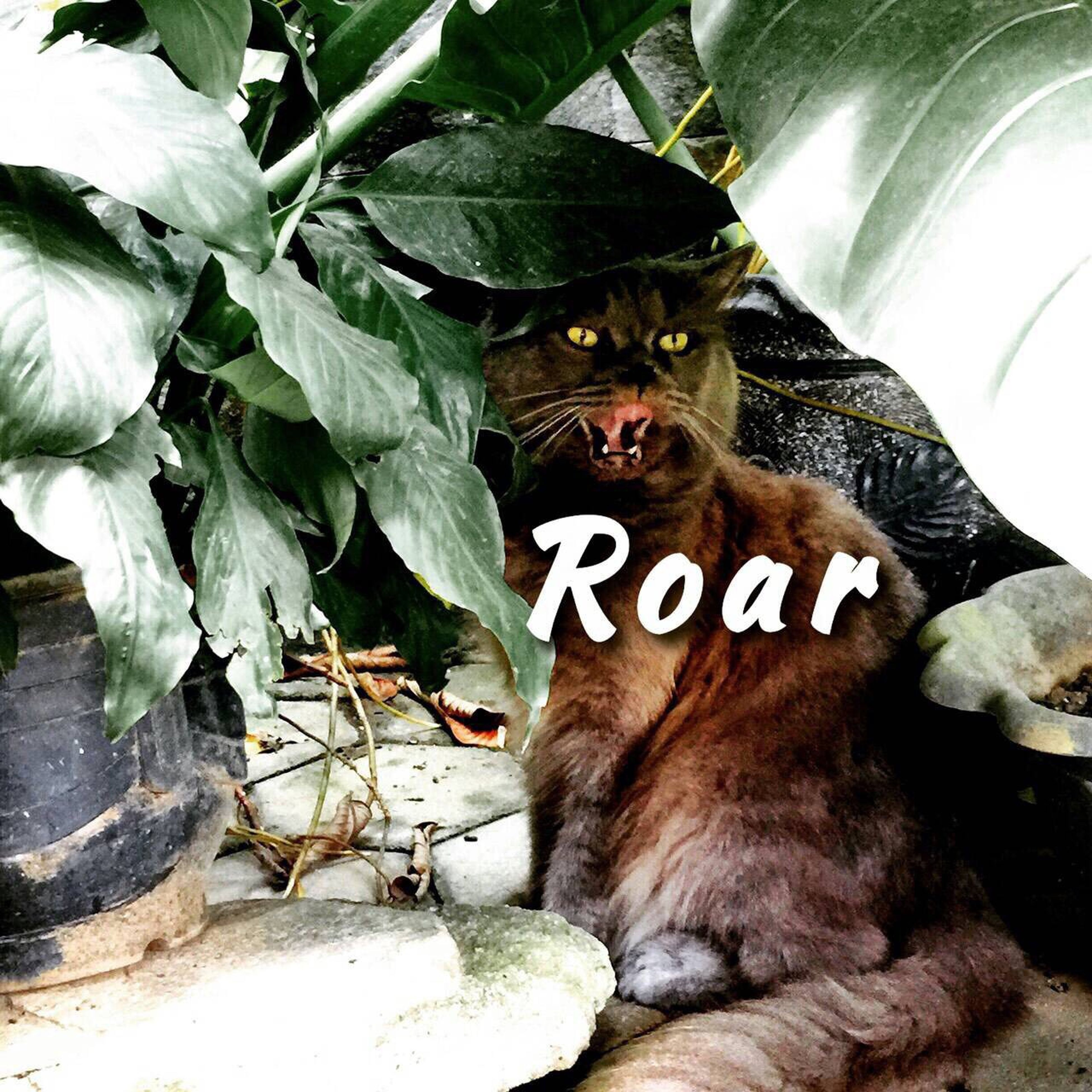 mammal, animal themes, domestic animals, pets, one animal, dog, domestic cat, relaxation, sitting, portrait, plant, looking at camera, cat, feline, leaf, resting, lying down, zoology, day, animal head