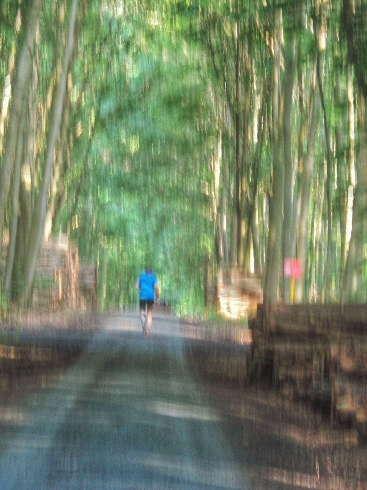 Jogging In The Woods Lonely Jogger In The Forest From Behind Running Creative Shots Movement Studies Unsharpness Foto ImpressionismTadaa Cityforest Frankfurt Am Main Germany🇩🇪 Showcase June