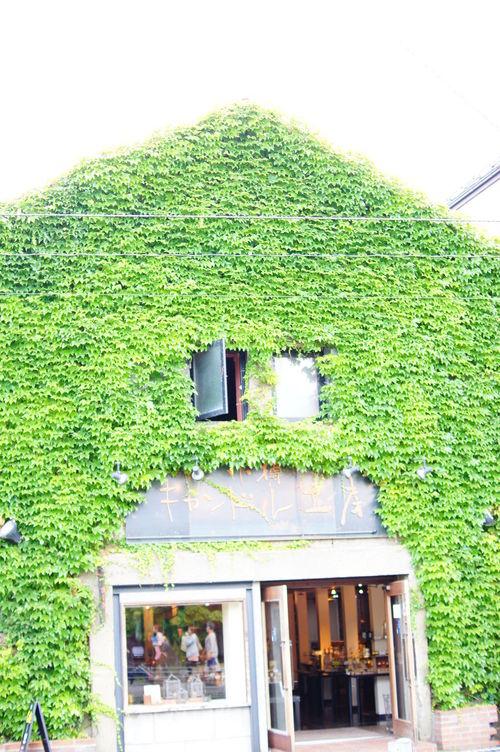 つた 蔦 Ivy House Ivy Wall Ivy Leaves Ivy Otaru 小樽