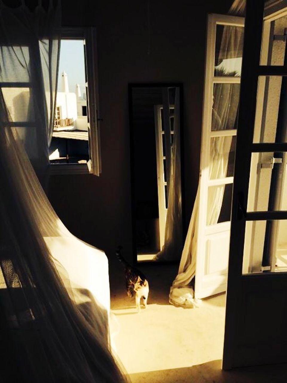 window, indoors, curtain, architecture, home interior, sunlight, no people, illuminated, day, pets, open door, animal themes, mammal