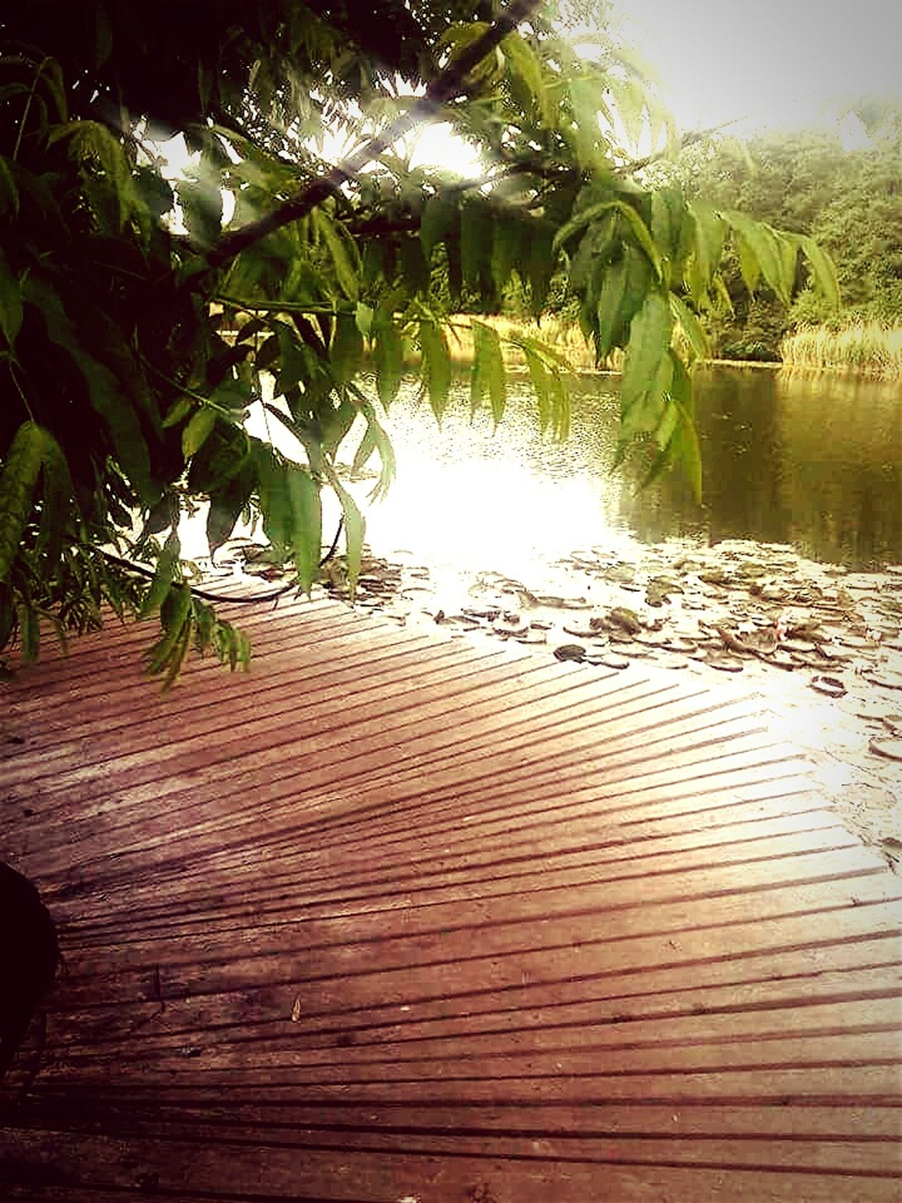 Walking Around Relaxing Eye Em Nature Lover EyeEm Best Shots - Nature Lovely Place Lake View Water Reflections Water - Collection Seeing The Sights