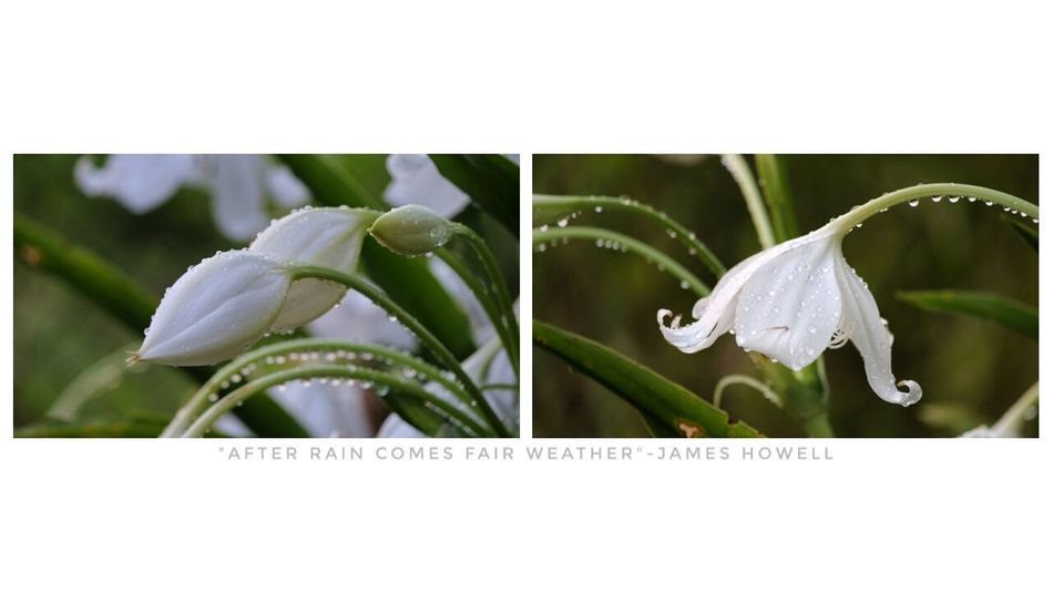 Plant Close-up Nature Flower Freshness Outdoors No People Eye4photography  Beauty In Nature After Rain