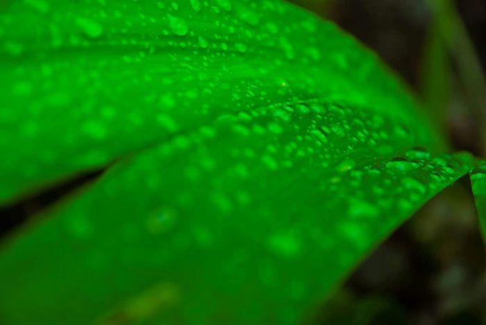Enjoying The Rain Drops Ladyphotographerofthemonth Traveling In Fukuoka The Drops Series Macrogardener Macro_collection Macro Nature Plantography Rain Drops Dropsoflife