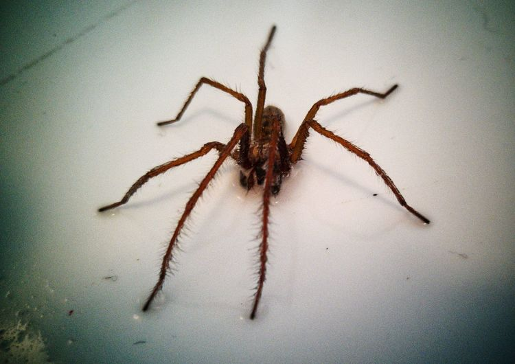 🕸️🕷️ Aragog, my new pet, at least until he washes down the spout! Spider Spider Spider Eyes One Animal Animal Wildlife Animal Themes No People Close-up Animal Leg Indoors  Nature Day EyeEmNewHere ExploreEverything Huawei P10 Plus EyeEm Nature Lover Nature On Your Doorstep Eight Legged Creature Eight Legs Eight Legged Insects Beautiful Nature Nature Pet Portraits The Week On EyeEm