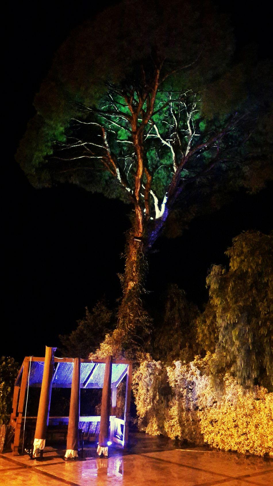 Tree Nighshoot Rainy Night Hugging A Tree