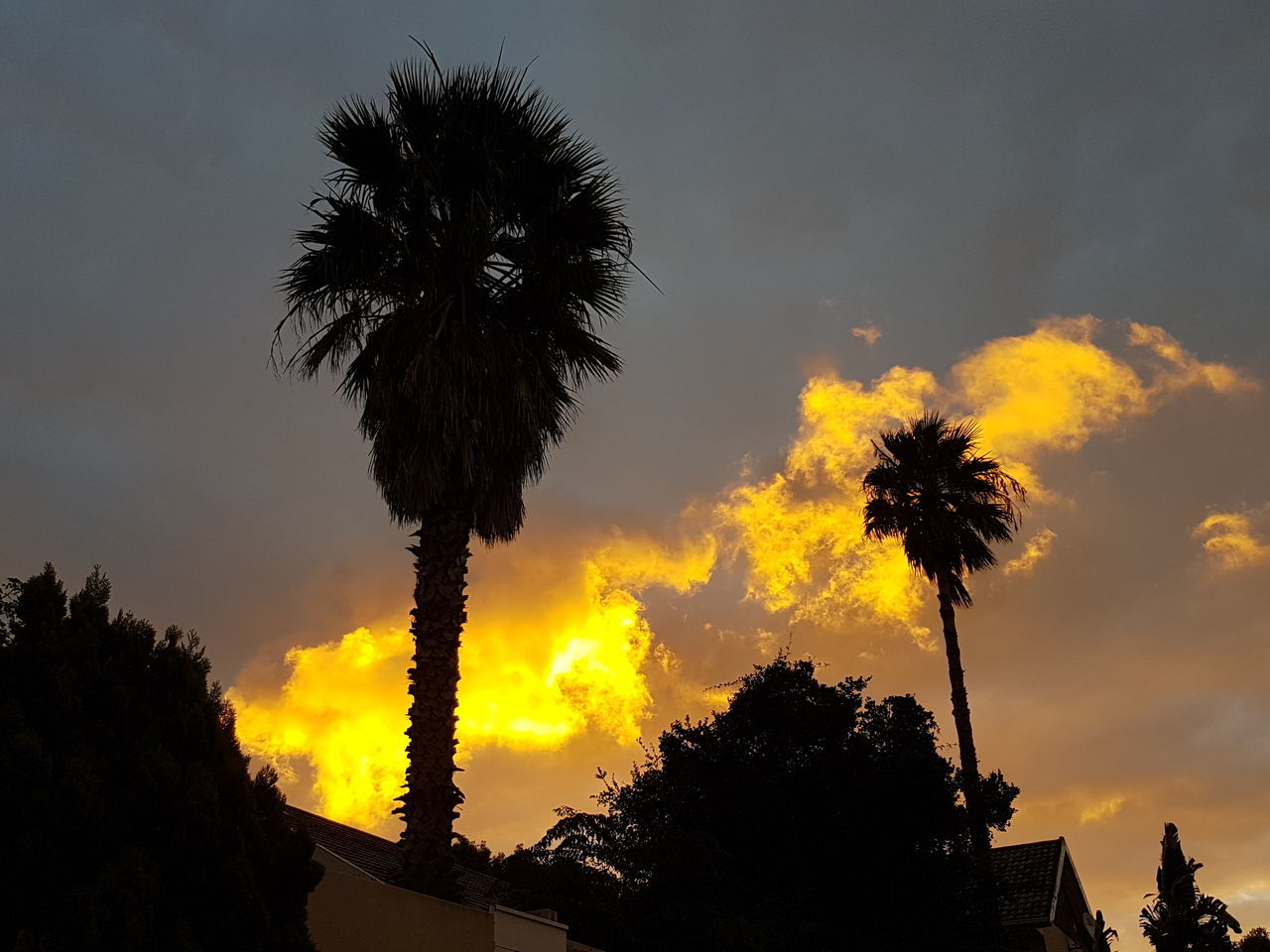 palm tree, tree, sky, silhouette, low angle view, cloud - sky, sunset, beauty in nature, tree trunk, growth, no people, nature, tranquility, outdoors, scenics, day