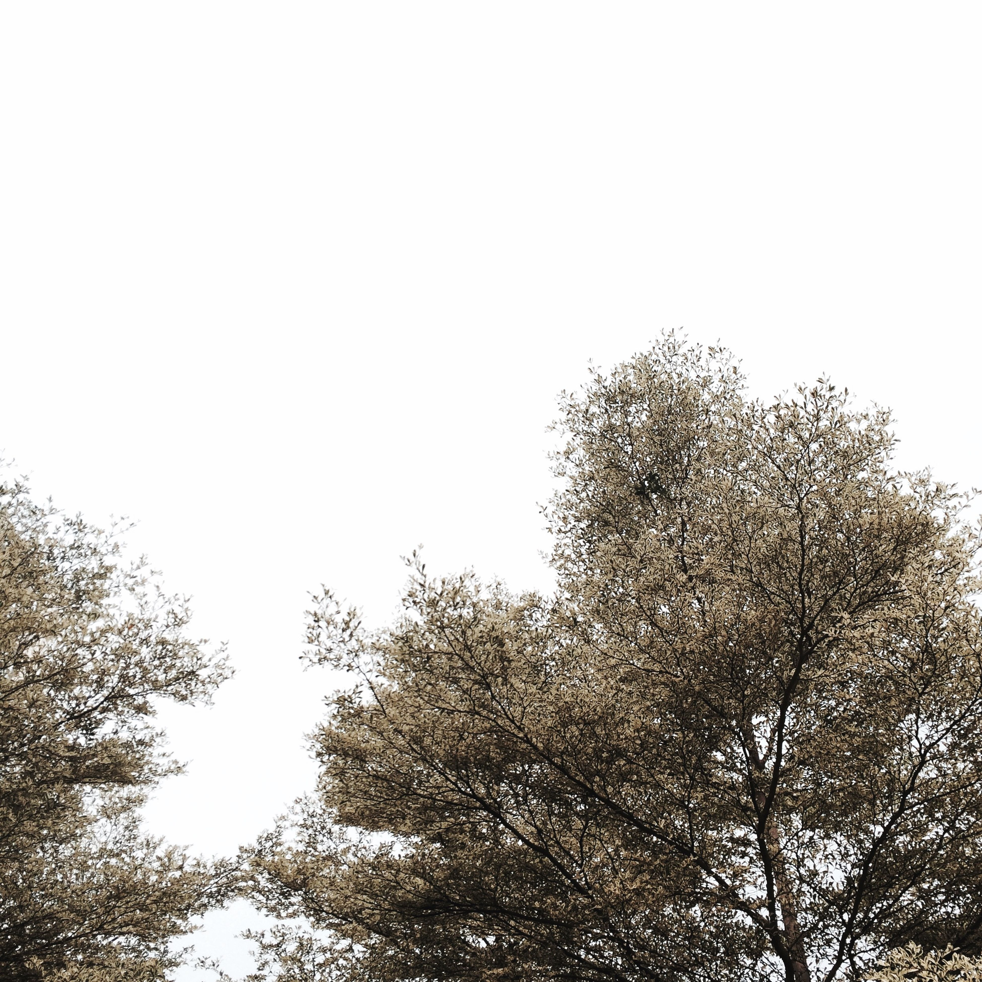 tree, clear sky, low angle view, copy space, branch, growth, nature, tranquility, beauty in nature, high section, treetop, sky, scenics, outdoors, day, tranquil scene, no people, bare tree, silhouette, idyllic