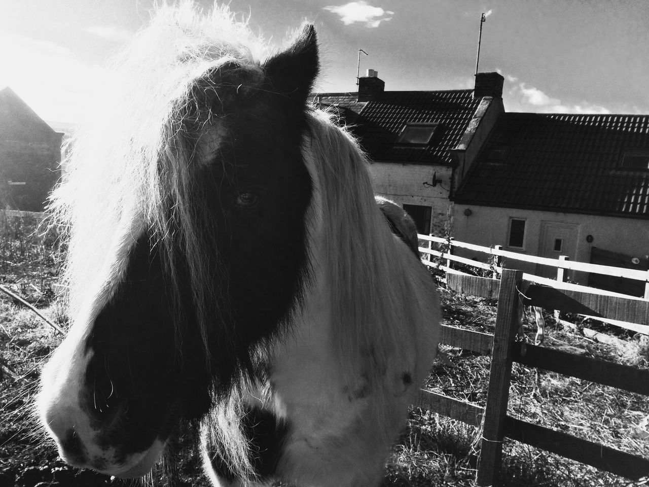 domestic animals, horse, animal themes, mammal, one animal, livestock, animal head, day, outdoors, standing, no people, pets, sky, close-up, nature