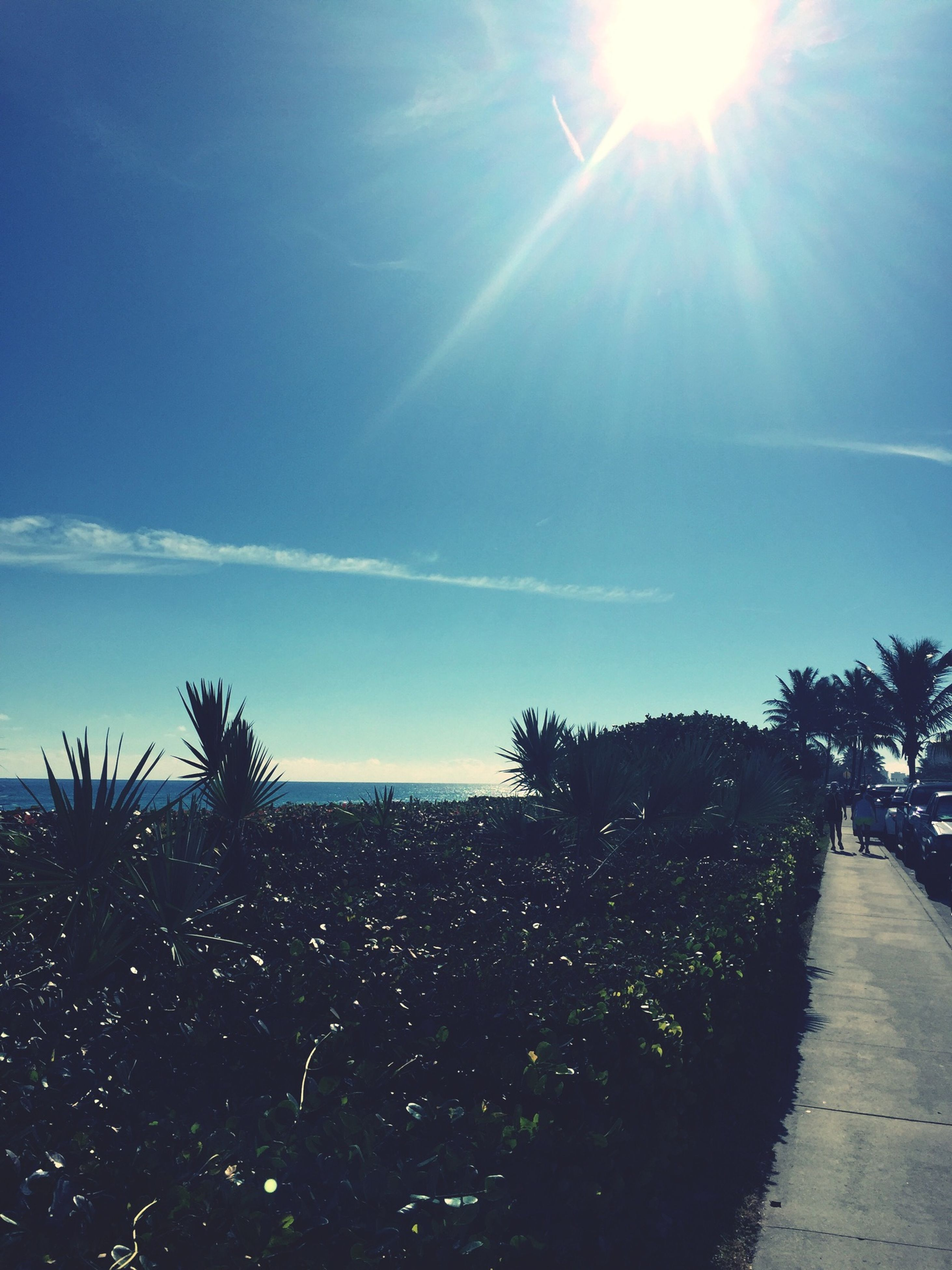 sun, sunlight, sunbeam, sea, horizon over water, sky, water, tranquil scene, blue, tranquility, lens flare, scenics, beauty in nature, sunny, beach, nature, tree, palm tree, bright, idyllic