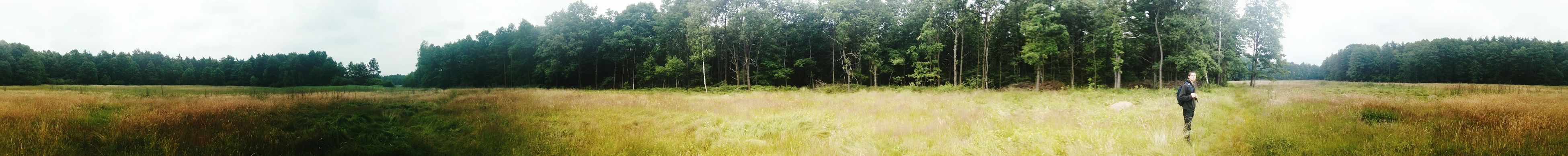 Forest Tychy