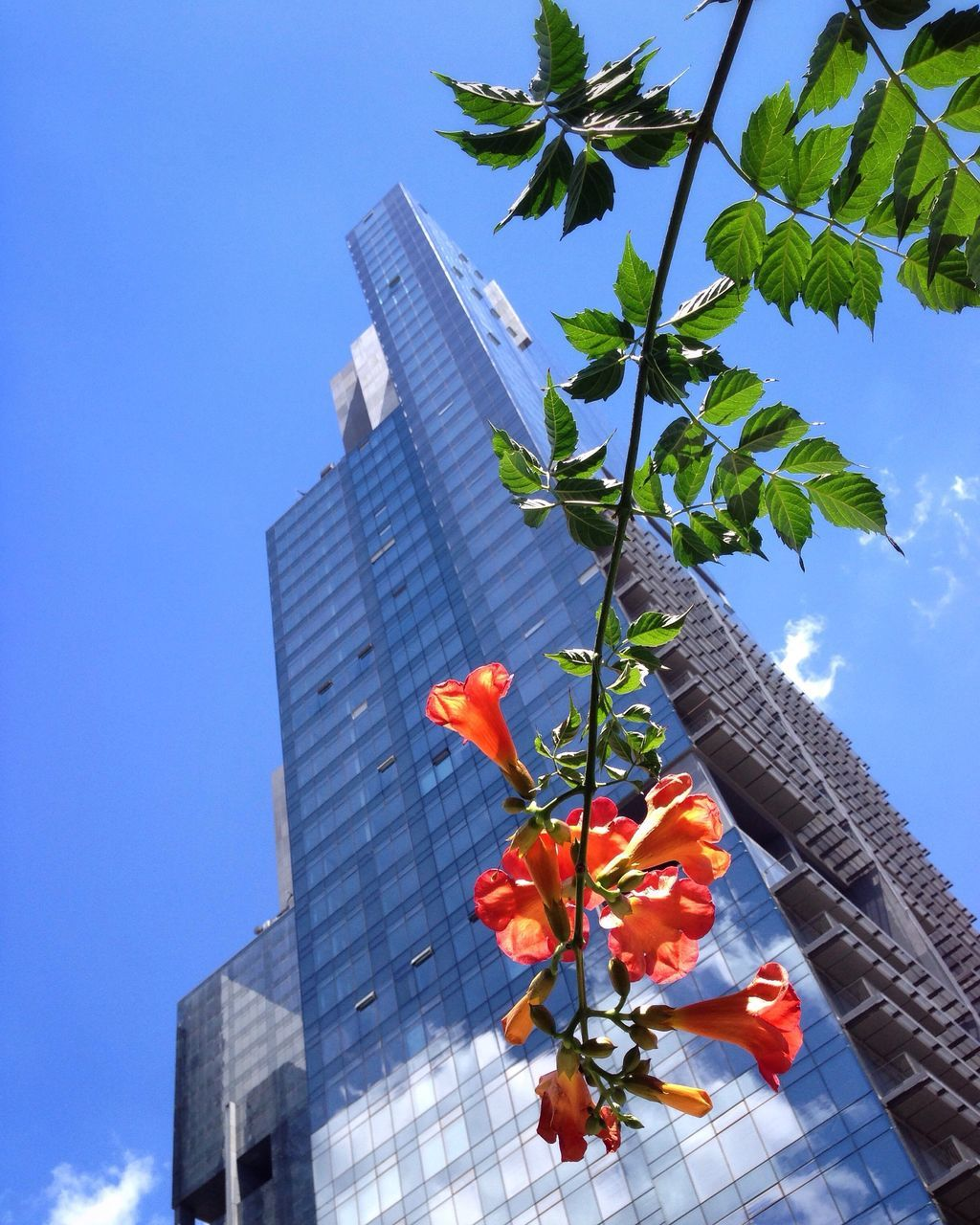 building exterior, built structure, architecture, low angle view, growth, day, leaf, no people, skyscraper, tree, outdoors, blue, flower, plant, sky, modern, branch, freshness, clear sky, city, nature