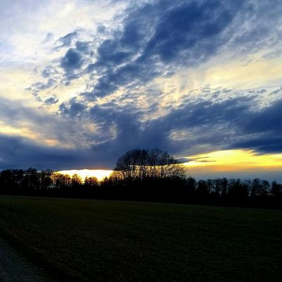 Sky And Trees Nature Sunset Outdoors Photography Clouds Light Evening